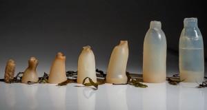 bouteille-biodegradable-islande-algues-1