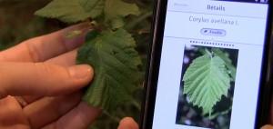 shazam-plantes-plantnet-1